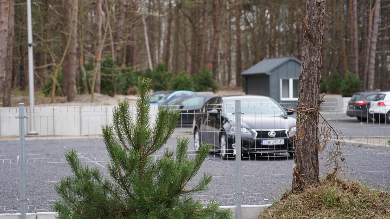 Samochód stojący na parkingu, a na pierwszym planie młoda sosna.